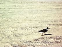 Osamotniony ptak Na plaży Obraz Royalty Free