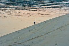 Osamotniony ptak w plaży w wschód słońca zdjęcie royalty free