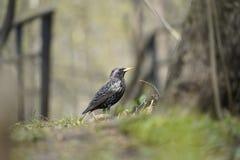 osamotniony ptak w poszukiwaniu jedzenia fotografia royalty free