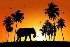 Osamotniony słoń na tropikalnym zmierzchu tle Zdjęcie Royalty Free