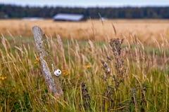 Osamotniony słup W polach Fotografia Royalty Free