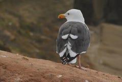 Osamotniony Seagull przy losem angeles Jolla fotografia royalty free