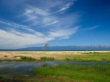 Osamotniony sosnowy pobliski jeziorny Baikal Zdjęcie Stock