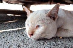 Osamotniony stary kot Obrazy Royalty Free
