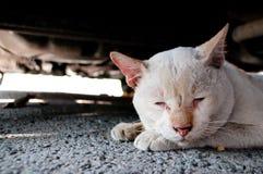 Osamotniony stary kot Fotografia Royalty Free
