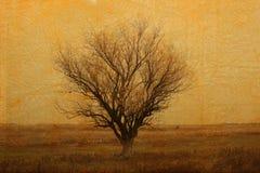 osamotniony stepowy drzewo Obrazy Stock