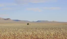Osamotniony suchy drzewo w szczerym polu zdjęcie stock