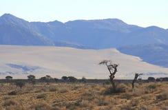 Osamotniony suchy drzewo w szczerym polu obraz royalty free