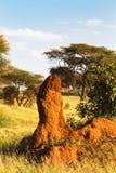 Osamotniony termitary w sawannie Tanzania, Afryka Obraz Royalty Free