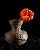 osamotniony tulipan Fotografia Royalty Free