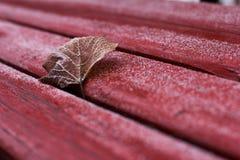 Osamotniony urlop w ławce Fotografia Stock