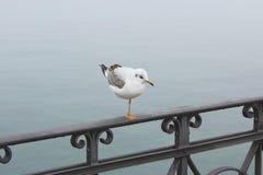 Osamotniony, złowrogi biały seagull, stoi na jeden nodze na żeliwnym poręczu, iskrzaste kropelki plątać w pajęczynie przeciw woda obrazy stock