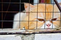 Osamotniony zanudzający pomarańczowy kot w klatce Fotografia Stock