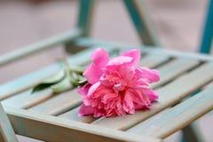 Osamotniony zapominający kwiatu symbol nieudany spotkanie obraz royalty free