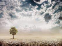 Osamotniony zielony drzewo Zdjęcia Stock