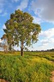 Osamotniony zielony drzewo Obraz Stock
