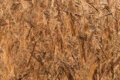 OSB-träpanel som göras av pressande träshavings Fångat på Sunny Day stark textur royaltyfri fotografi
