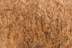 OSB-träpanel som göras av pressande träshavings Fångat på Sunny Day stark textur royaltyfri foto