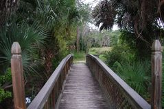 Oscar Scherer State Park. Located in Osprey florida Stock Photos