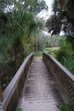 Oscar Scherer State Park. Located in Osprey florida Stock Photography