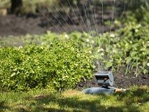 A oscilação irrigando o jardim e o gramado no verão do dia jardinam Fotografia de Stock Royalty Free