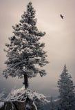Oscila paisaje del invierno Fotografía de archivo