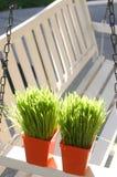 Oscilación blanco del pórtico con la hierba Imagen de archivo