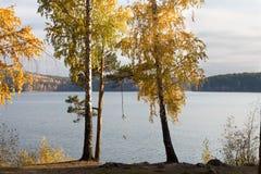Oscilación de la cuerda en un árbol Fotografía de archivo