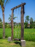 Oscilaci?n de la cuerda en un campo verde del arroz fotografía de archivo