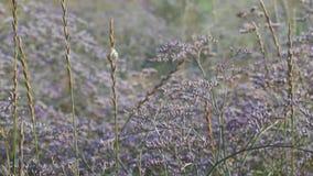 Oscilación de las flores del prado del viento almacen de metraje de vídeo