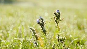 Oscilación de las flores salvajes en el viento almacen de video