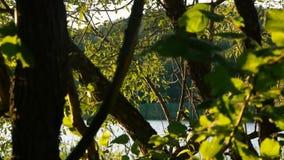Oscilación de las hojas en el viento