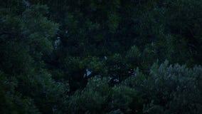 Oscilación de las ramas de árbol en Windy Evening almacen de video