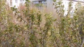 Oscilación de los árboles en el fondo de casas almacen de metraje de vídeo