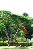 Oscilación de madera debajo de un árbol grande Imagenes de archivo