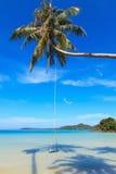 Oscilación de madera en una palma de coco Foto de archivo libre de regalías