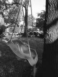 Oscilación del árbol Fotos de archivo libres de regalías