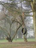 Oscilación del árbol del neumático en el parque en mañana de niebla Fotos de archivo