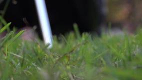 Oscilación del golf almacen de metraje de vídeo