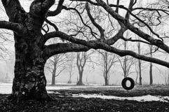 Oscilación del neumático Fotos de archivo libres de regalías