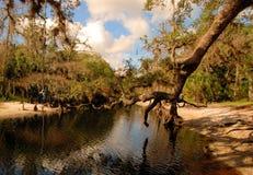 Oscilación del pantano Fotos de archivo libres de regalías