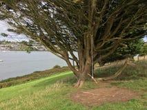 Oscilación en el árbol Imagen de archivo libre de regalías