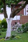 Oscilación en un árbol Imagen de archivo libre de regalías