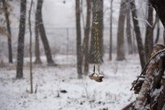Oscilación en un parque en el invierno imágenes de archivo libres de regalías