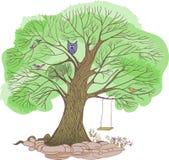 Oscilación grande verde del árbol Imágenes de archivo libres de regalías