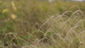 Oscilaciones de la hierba en el campo metrajes