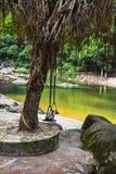 Oscilaciones en un árbol en los bancos de un río de la montaña Imagen de archivo