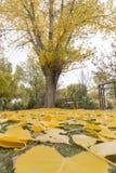Oscilaciones en un parque con las hojas caidas amarillas de árboles Imagenes de archivo