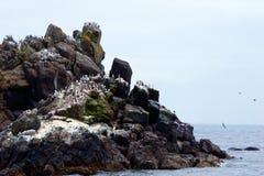 Oscile con los pájaros de las golondrinas de mar de las columnas en Costa del Pacífico en Newport Imágenes de archivo libres de regalías