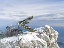 Oscile con un pino solo en montañas en Crimea foto de archivo libre de regalías